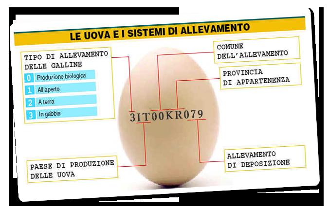 etiche-UOVA-card-2